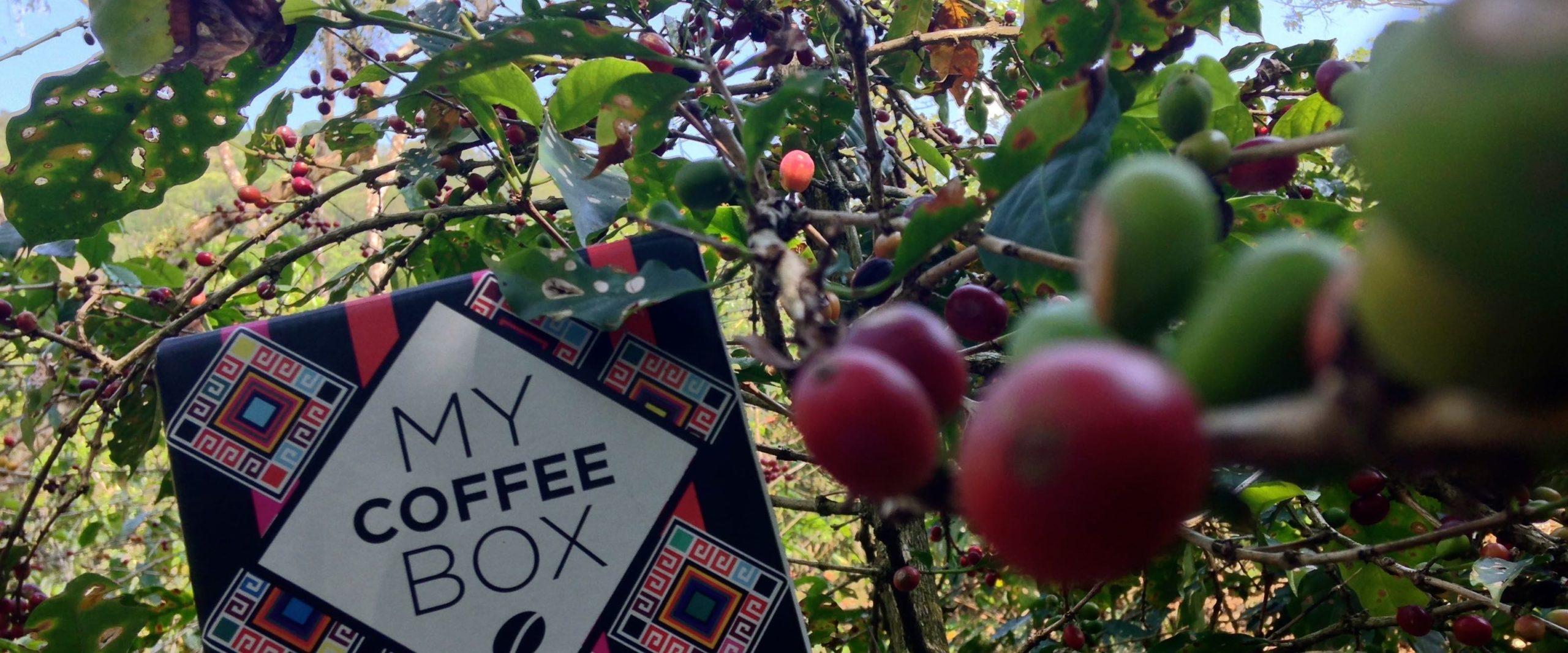 caja mycoffeebox con cafe organico de chiapas