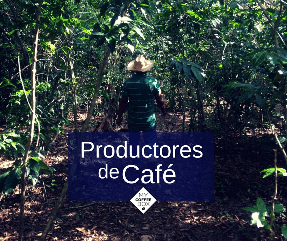 productores de cafe en chiapas mycoffeebox