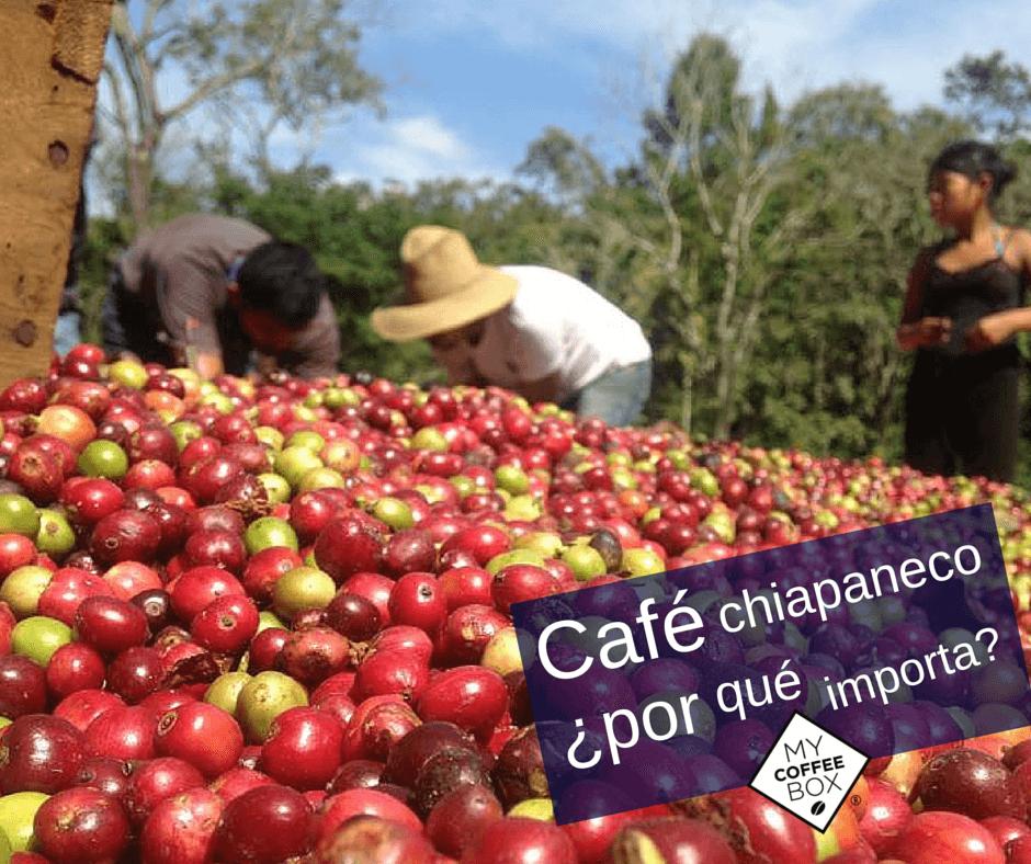 mycoffeebox cafe chiapas la importancia social y economica