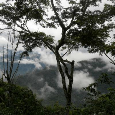 productores de la selva lacandona
